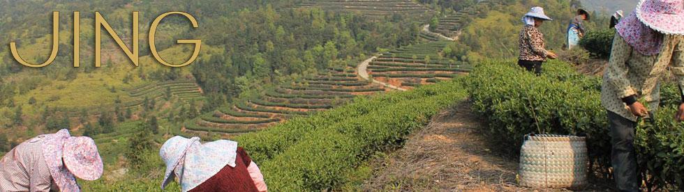JING TEA茶園